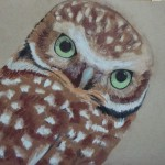 Owl, green eyes