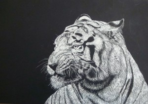 Tiger by Lauren, age 15